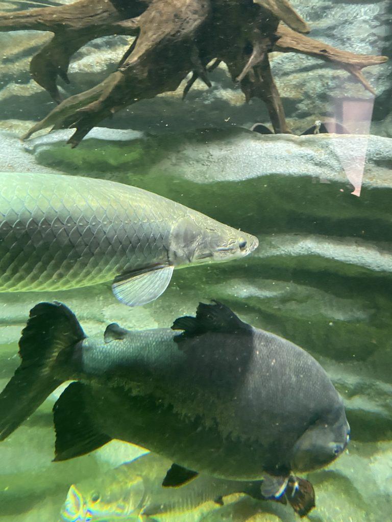 多くの魚が!!